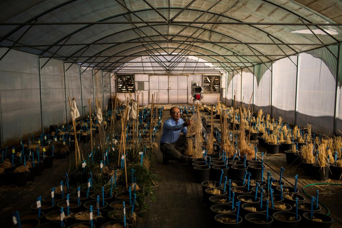 Ali Shehadeh, a plant conservationist from Syria who fled the war in his country, at work in Terbol, Lebanon. Credit Diego Ibarra Sanchez for The New York Times