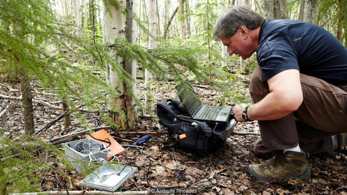 Vladimir Romanovsky crouches as he collects temperature recordings beneath the forest floor (Credit: Anthony Rhoades)